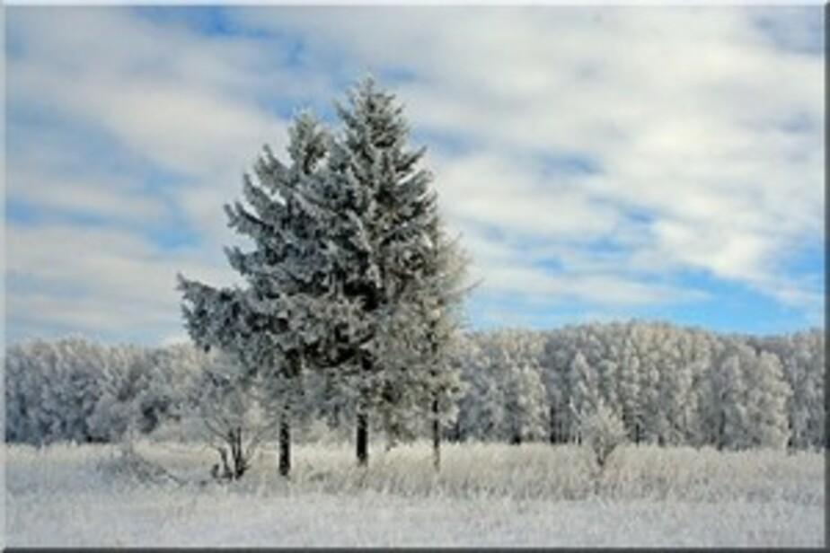 В конце недели в Калининграде обещают минусовые температуры