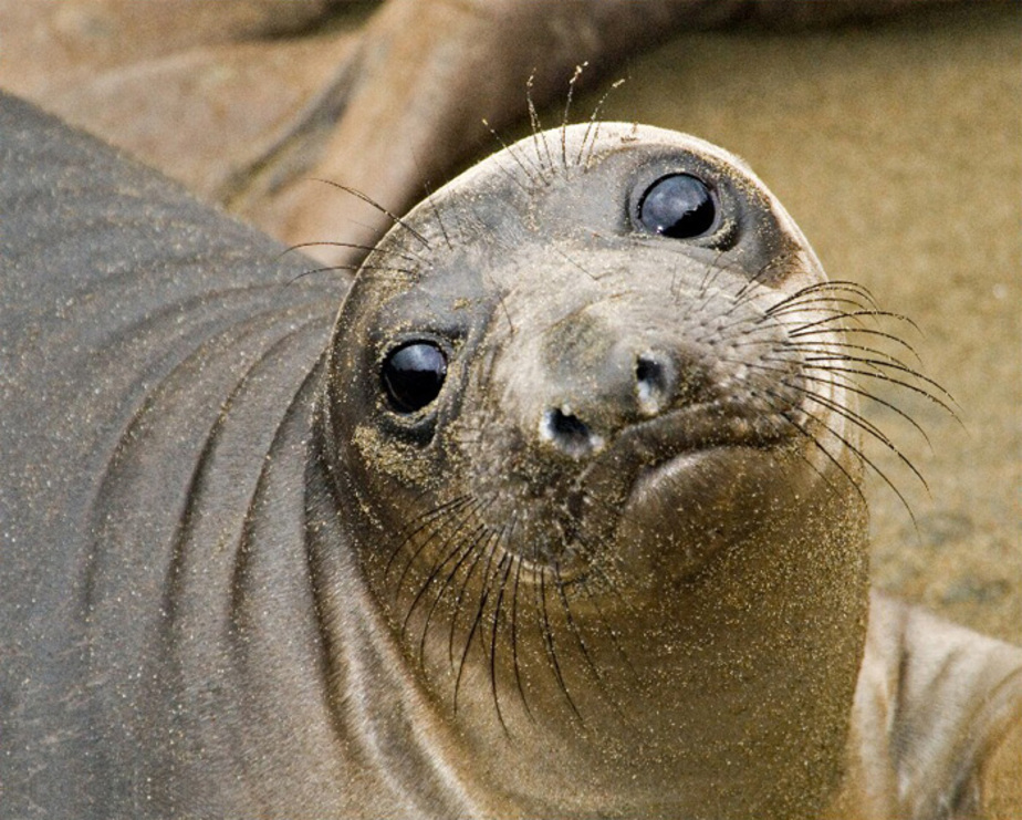 У побережья Светлогорска появились два тюленя - Новости Калининграда
