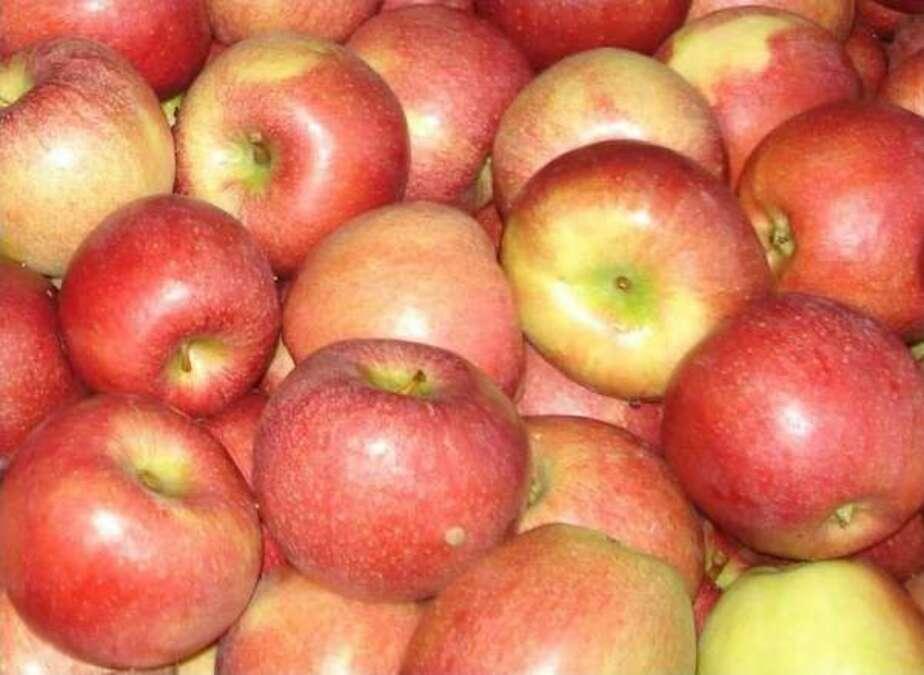 Польские фермеры собрали почти 3 млн тонн яблок- 60- урожая пойдет в Россию - Новости Калининграда