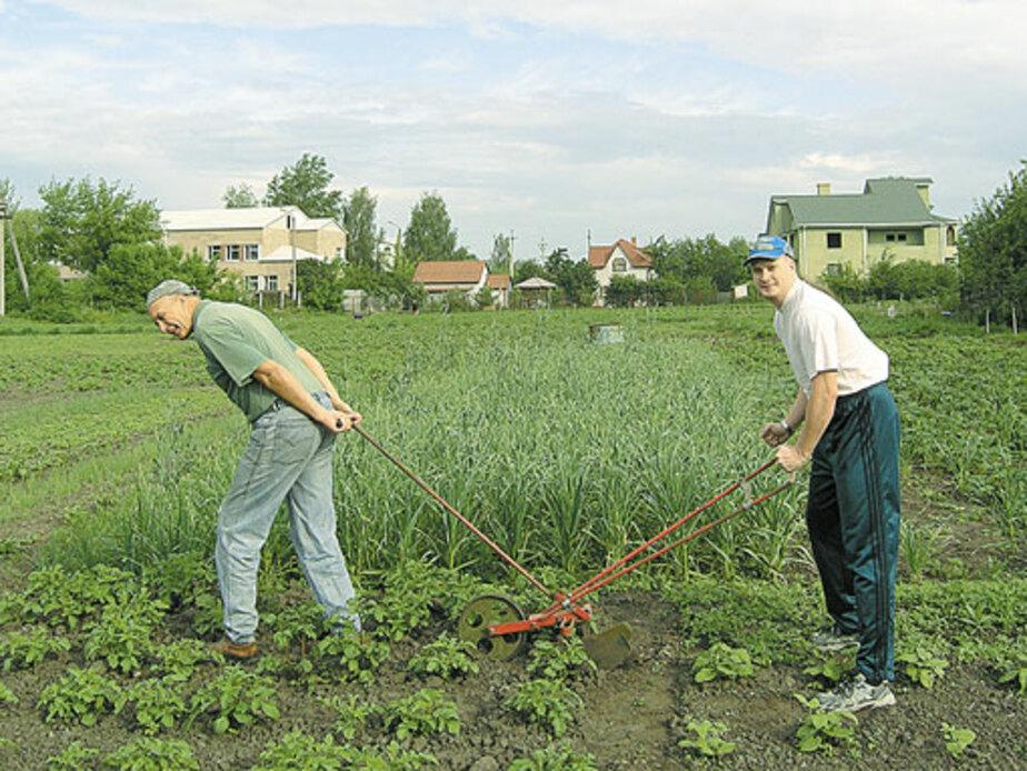 Овощи любят «переезды» - Новости Калининграда