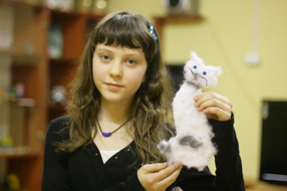 Забавный котик - Новости Калининграда
