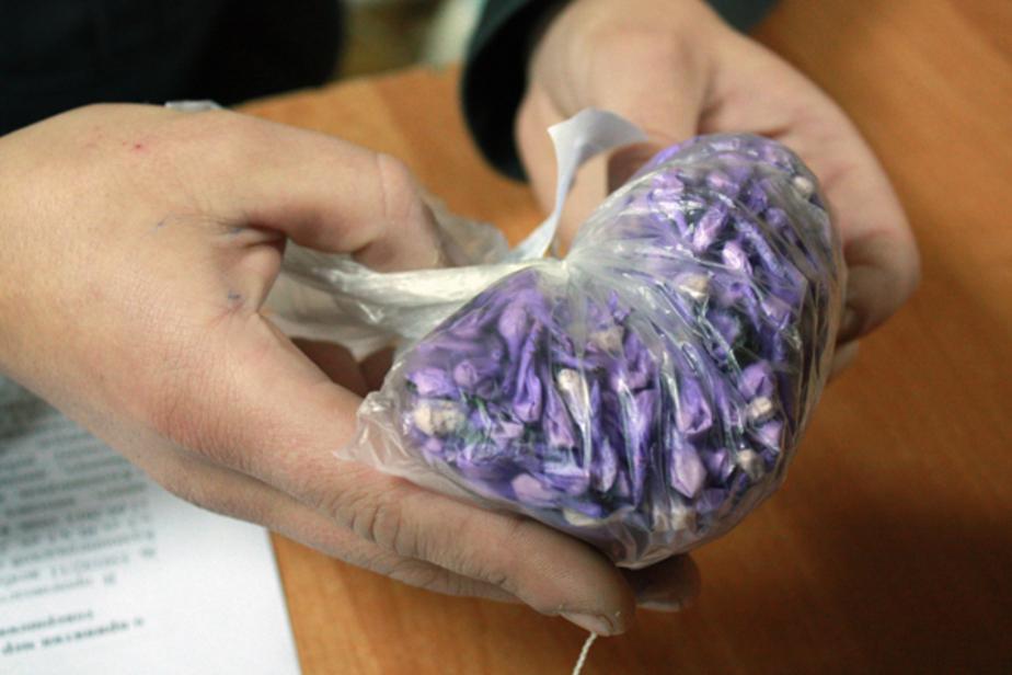 УВД- В квартире у калининградца обнаружили 683 свертка с героином - Новости Калининграда