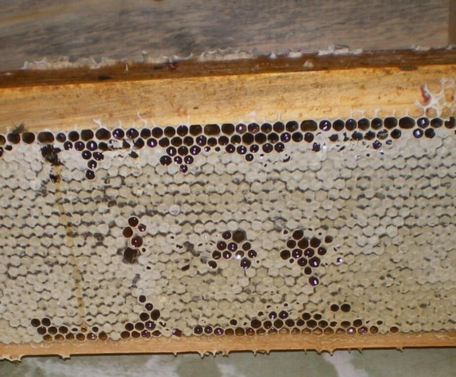 """Житель Краснознаменска обокрал пчеловода """"просто захотев меда"""""""