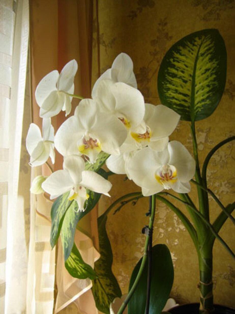 «Мои цветочки любят солнышко и ласку» - Новости Калининграда