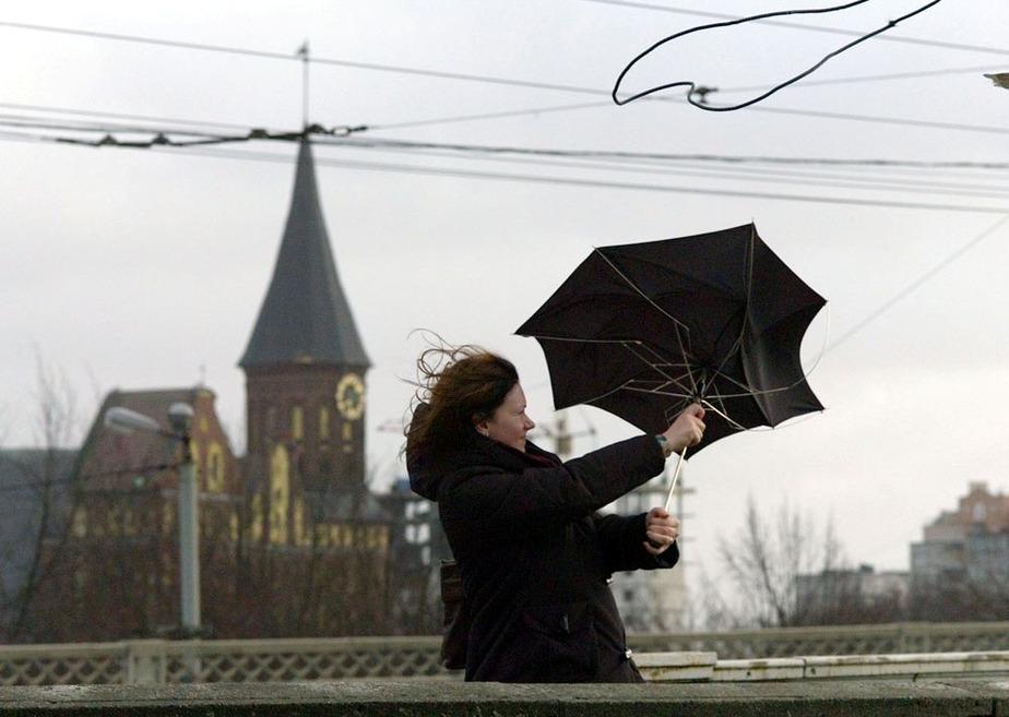 МЧС- В области ожидается усиление ветра до 22 м-с - Новости Калининграда