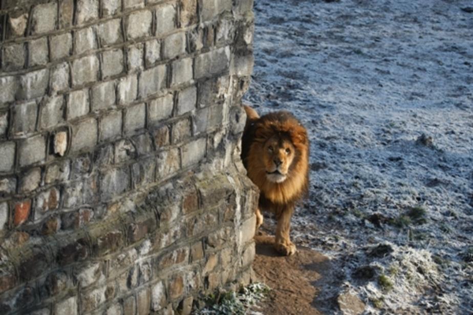 В калининградском зоопарке реконструируют ущелье с водопадом - Новости Калининграда