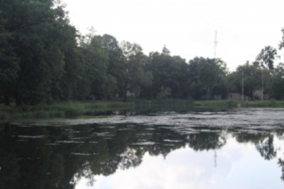 В Калининграде благоустроят озеро на ул- Некрасова - Новости Калининграда