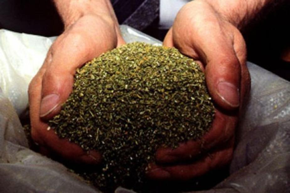 На ул-Фрунзе задержали водителя-наркомана с марихуаной - Новости Калининграда