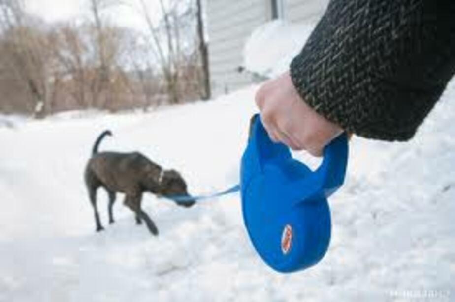 В Калининграде определят места для выгула собак