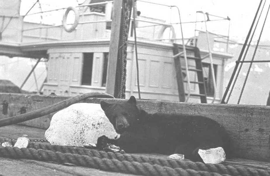 Медведь на корабле картинки