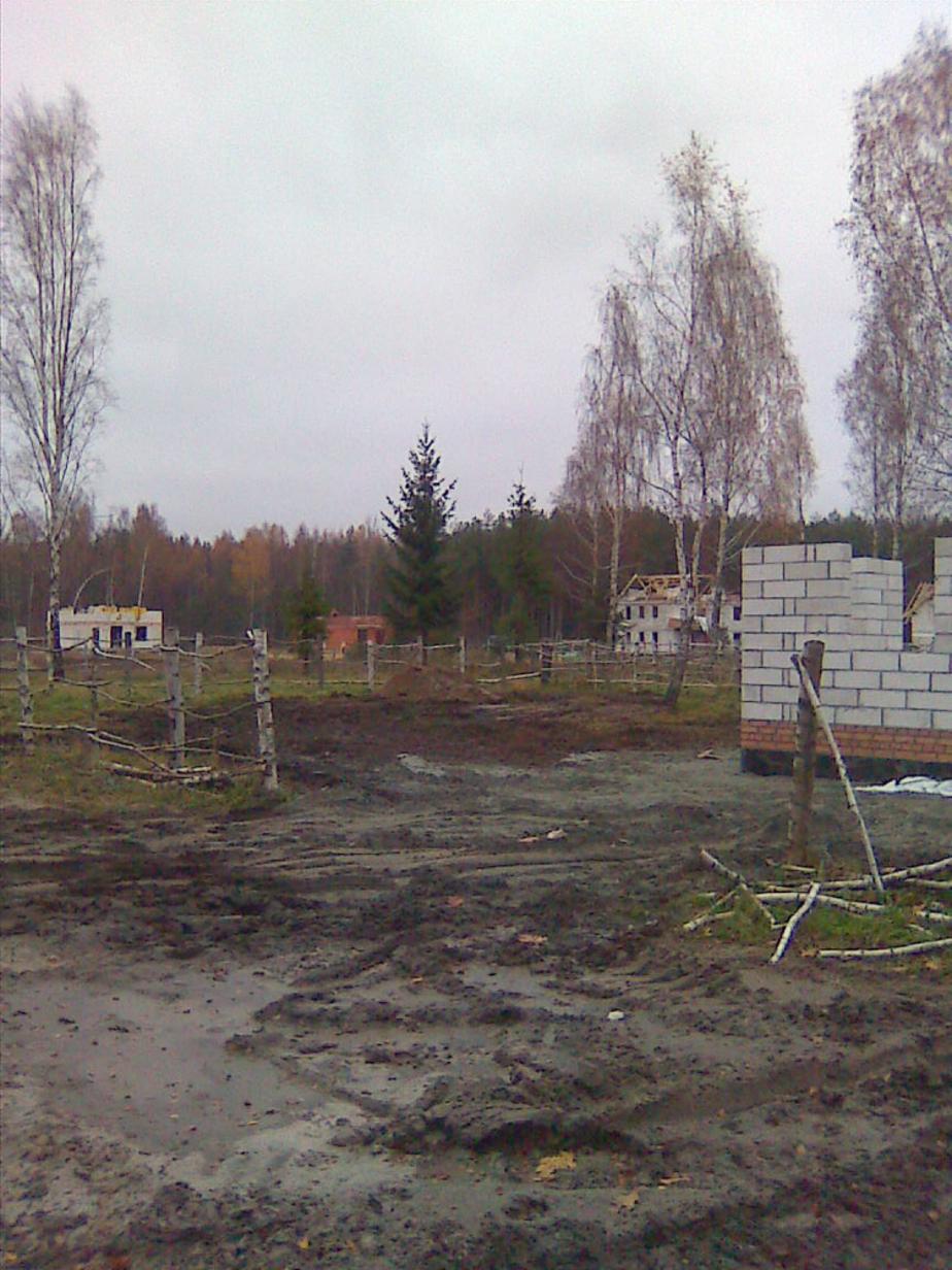 Подрядчик- вырубивший деревья в Прибрежном- не заплатил за причиненный ущерб
