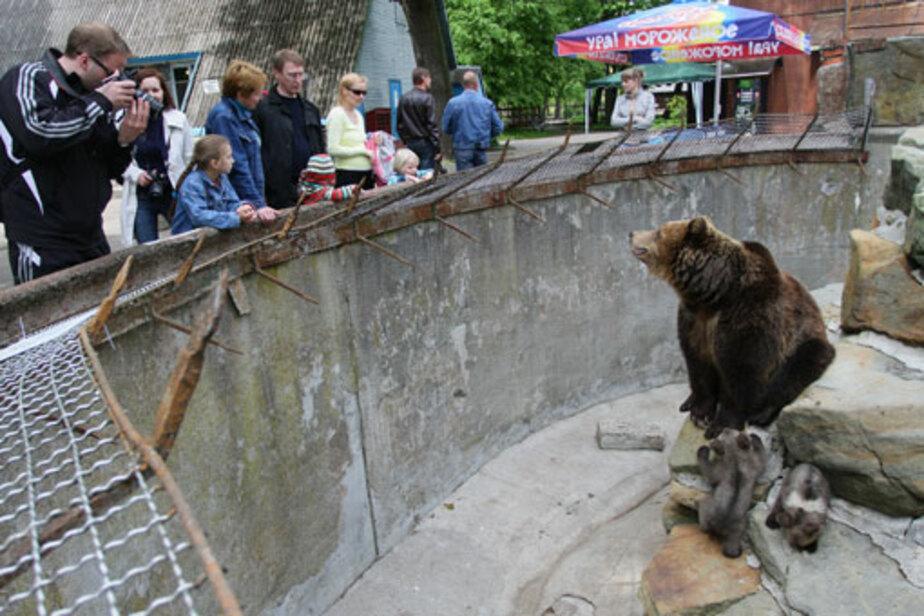 Зоопарк: надежда на «круглый стол»? - Новости Калининграда