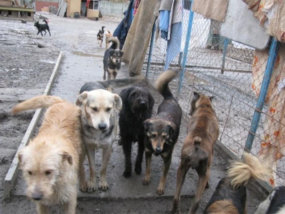 В Балтийске стая собак набросилась на 8-летнюю девочку - Новости Калининграда