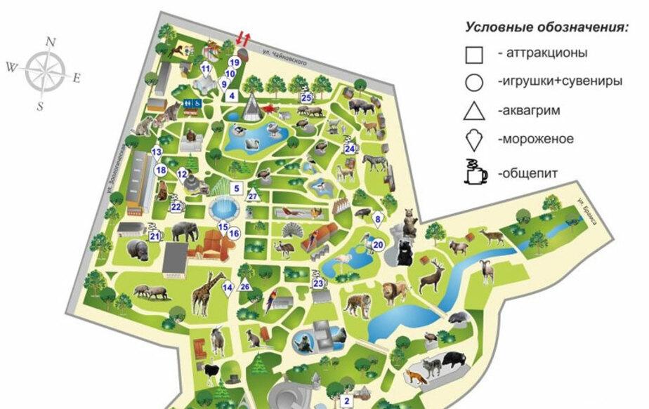 Кому батут- - Новости Калининграда