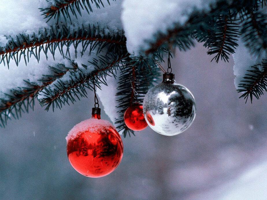 В Калининград ввезли 1000 новогодних елей из Польши