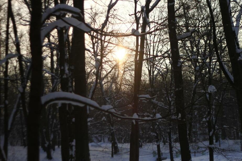 Центральный парк- Труп на дереве сутки висел не на нашей территории - Новости Калининграда