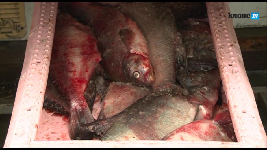 Экологи нашли на Центральном рынке опасную для здоровья рыбу - Новости Калининграда