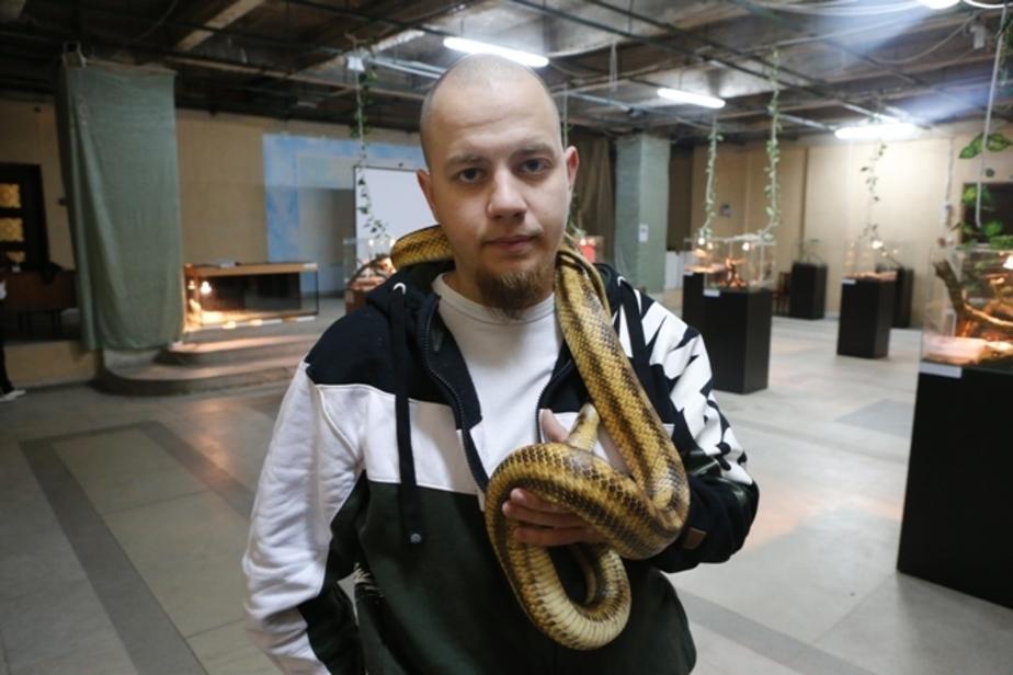 Калининградец держит дома 15 змей и крокодила Гену - Новости Калининграда