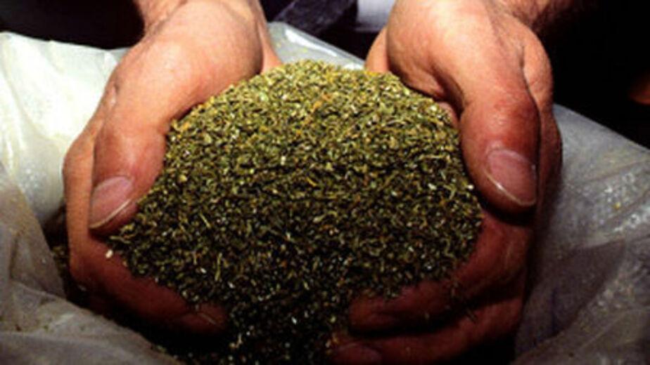 Жителя Немана задержали при продаже 32 гр- марихуаны - Новости Калининграда