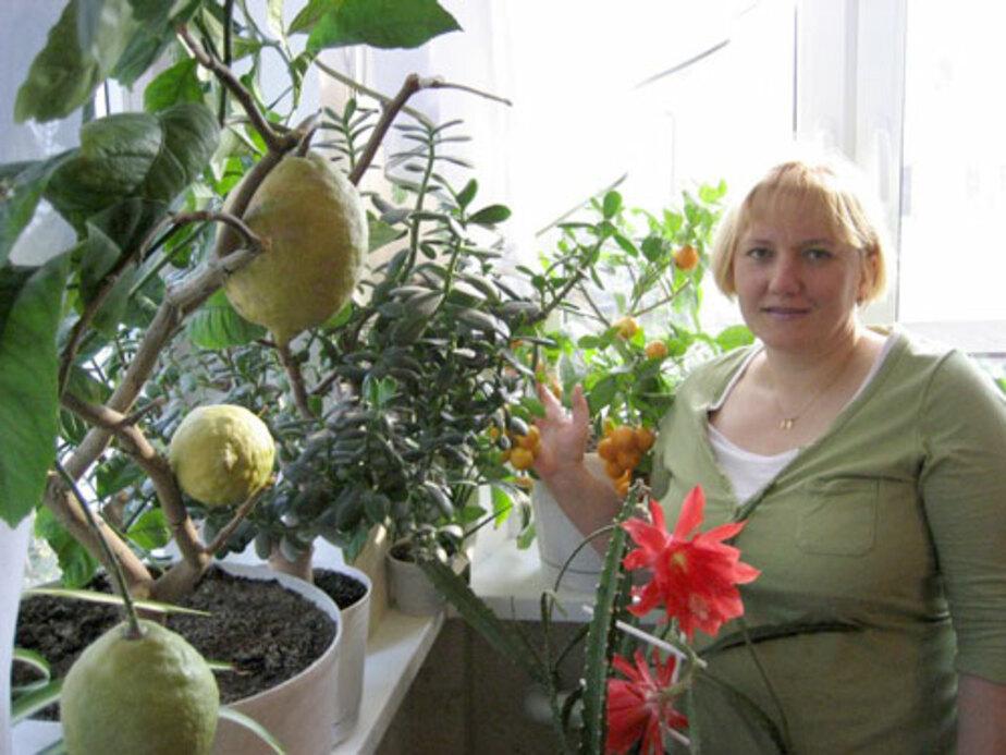 «Мои лимоны самые ароматные» - Новости Калининграда