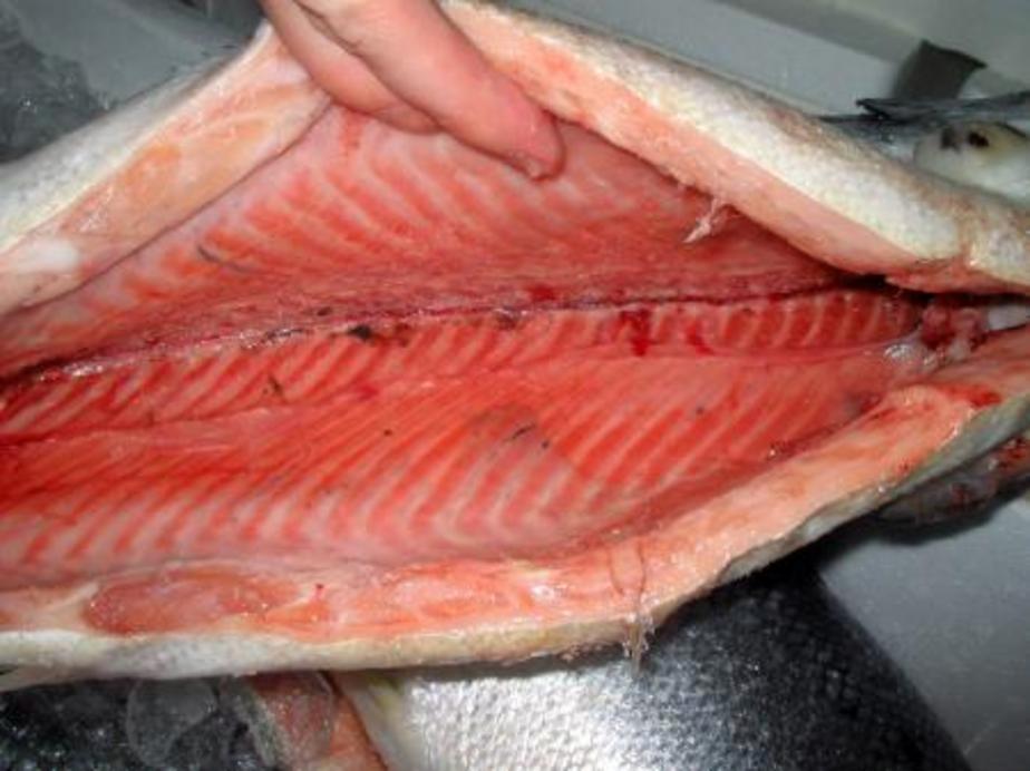 Россельхознадзор не пустил в Калининград 17-5 тонн лосося с Фарерских островов - Новости Калининграда