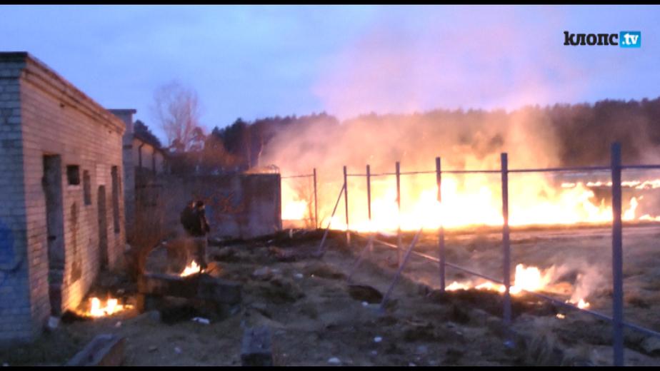 """В Светлом из-за горящей травы чуть не сгорел мясокомбинат """"Гурман"""" - Новости Калининграда"""