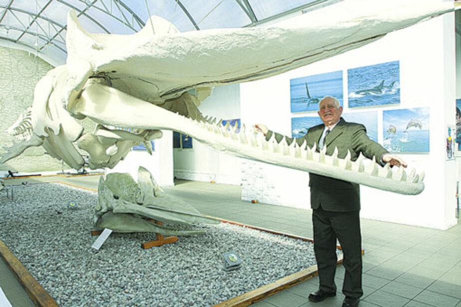 Кашалота в Музей Мирового океана привезли с немецкого кладбища - Новости Калининграда
