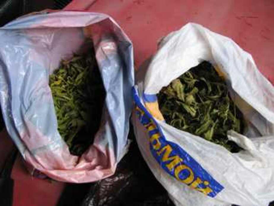 На улице в Калининграде задержали наркоманку с 2 кг марихуаны - Новости Калининграда
