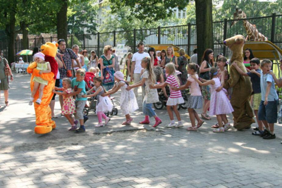 Как спят жирафы? - Новости Калининграда