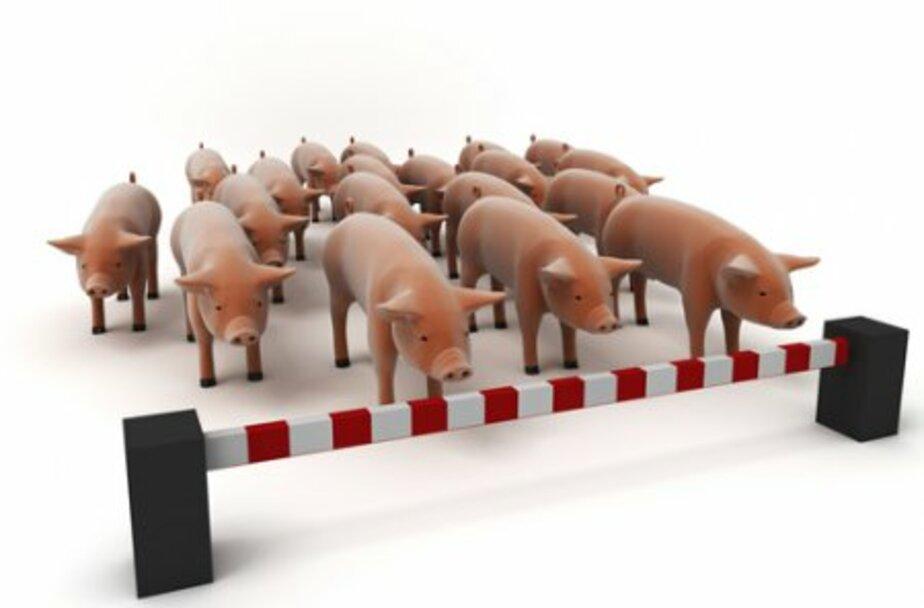 В Калининграде зафиксировали единичные случаи свиного гриппа - Новости Калининграда
