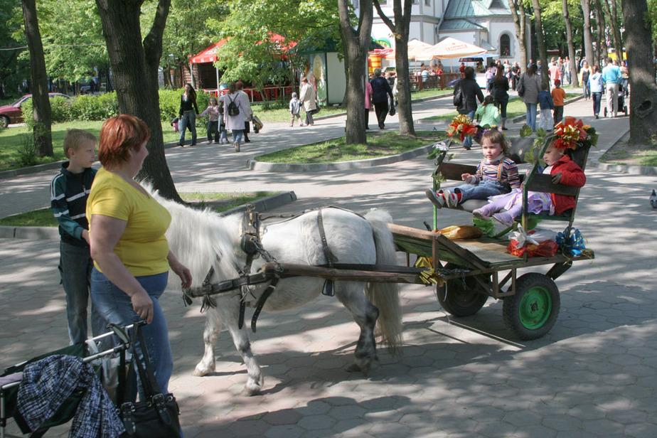 Давайте обгадим парк Калинина! - Новости Калининграда