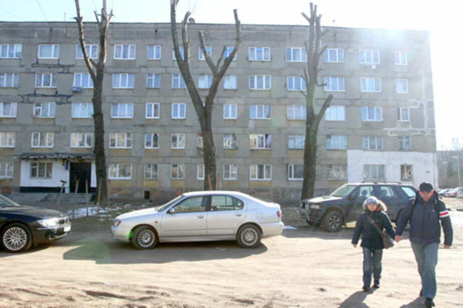 Опасные деревья спилят, за мусор оштрафуют - Новости Калининграда