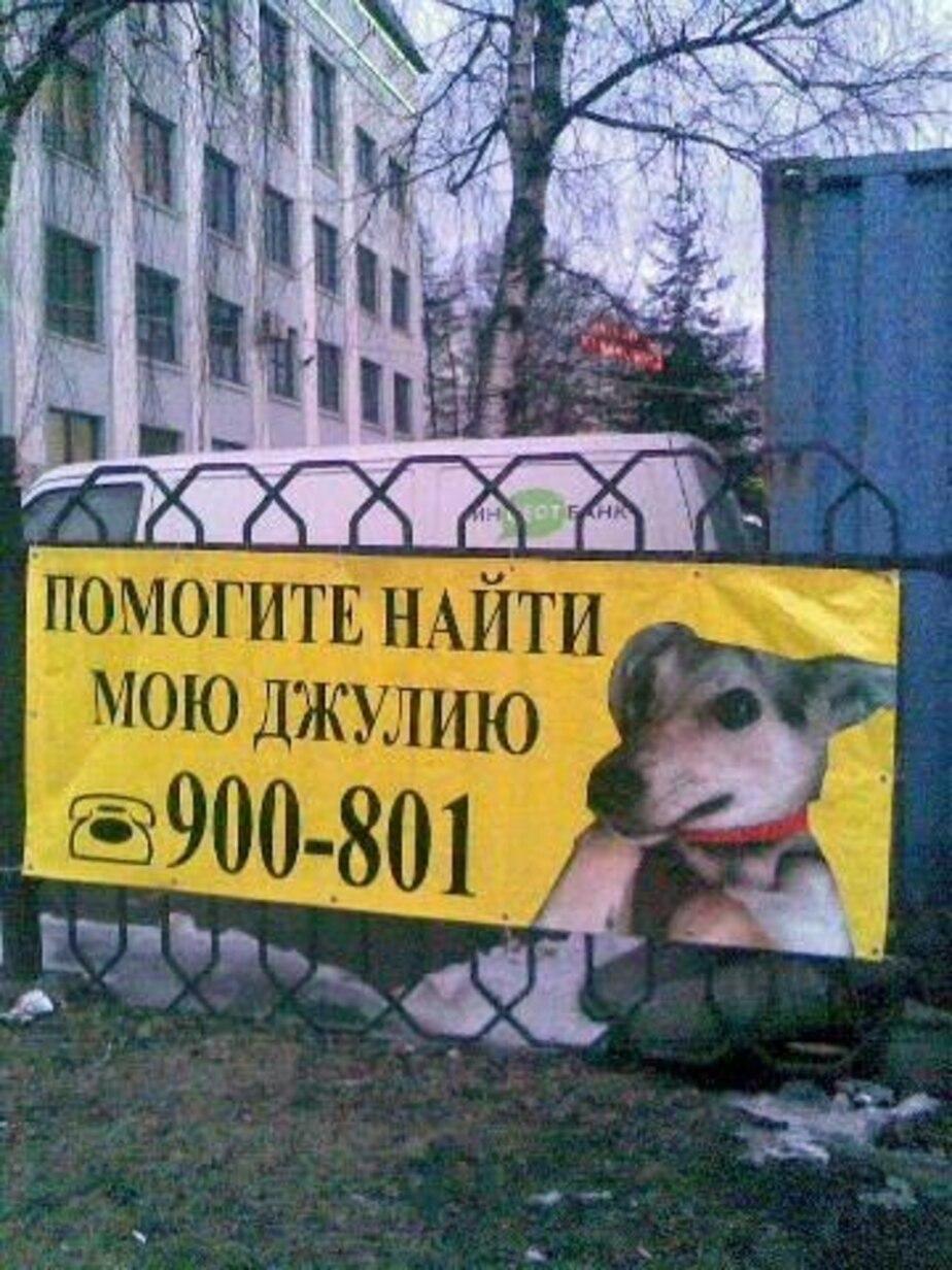 Калининградка разыскивает пропавшую собаку с помощью наружной рекламы - Новости Калининграда