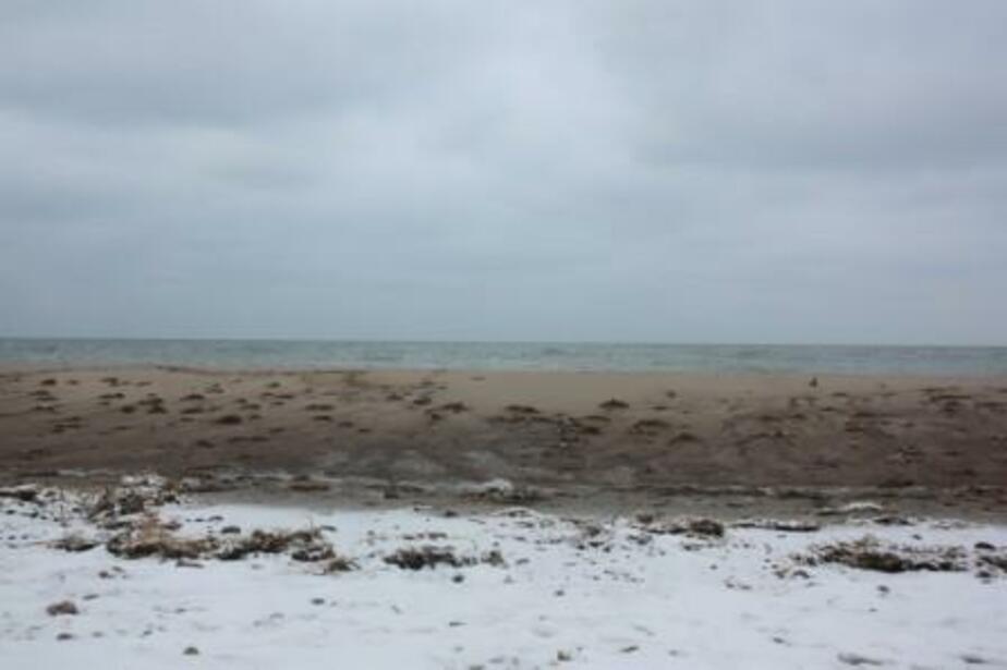 На пляжи Куршской косы возвращается песок - Новости Калининграда