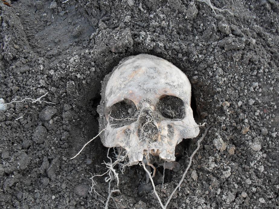 В Калининграде обнаружено второе крупное захоронение времен Наполеновских войн - Новости Калининграда