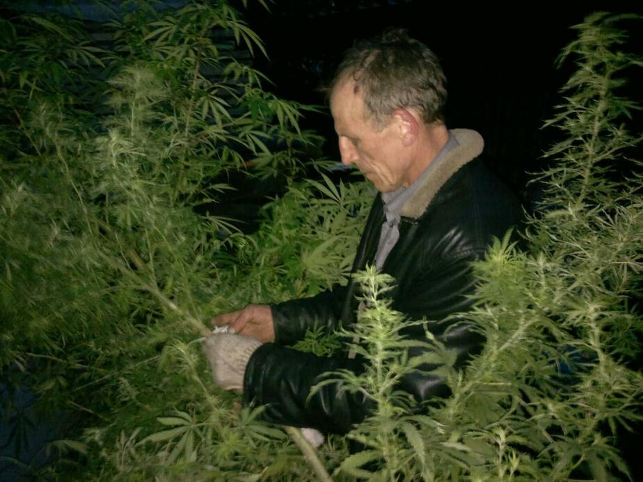 Выращивал коноплю калининград марихуана боли в сердце