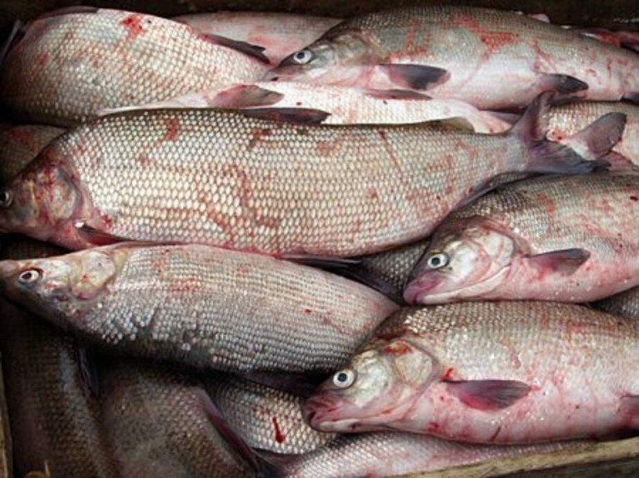 В Багратионовском интернате -5 детям недодавали рыбу и мясо - Новости Калининграда