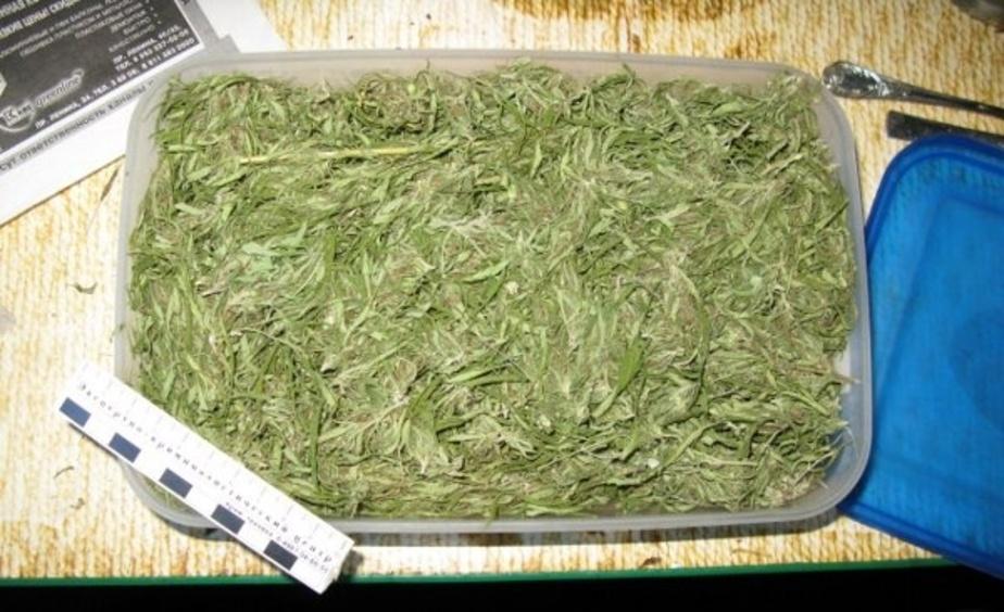В доме жителя пос- Гусево обнаружили 173 граммов марихуаны