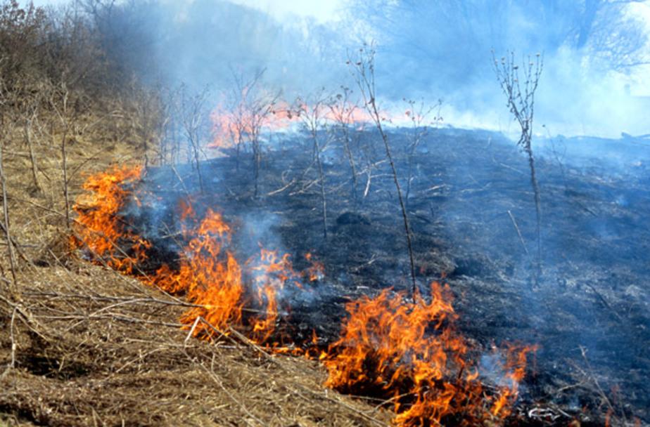 В Багратионовске горящая трава повредила трубы газопровода - Новости Калининграда