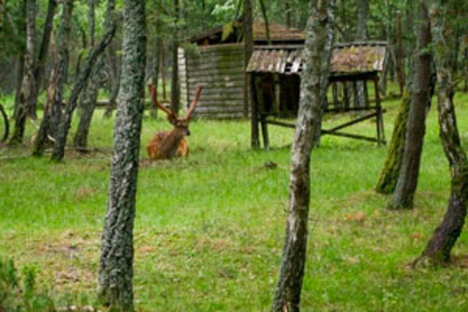 В Калининградской области определены границы охотничьих угодий - Новости Калининграда