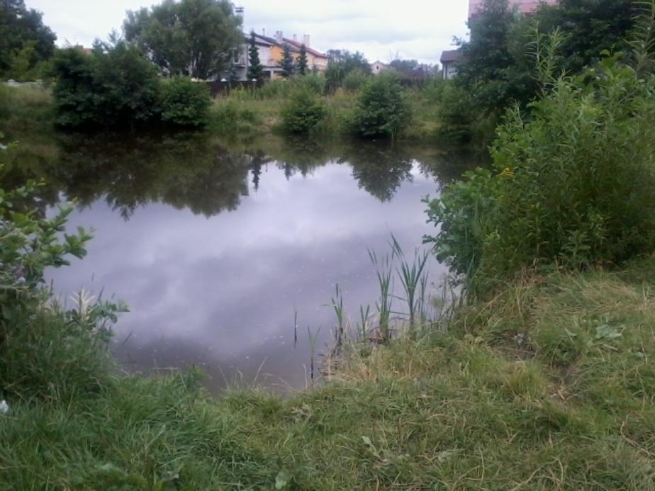 В Калининграде в озере обнаружили три боеприпаса - Новости Калининграда