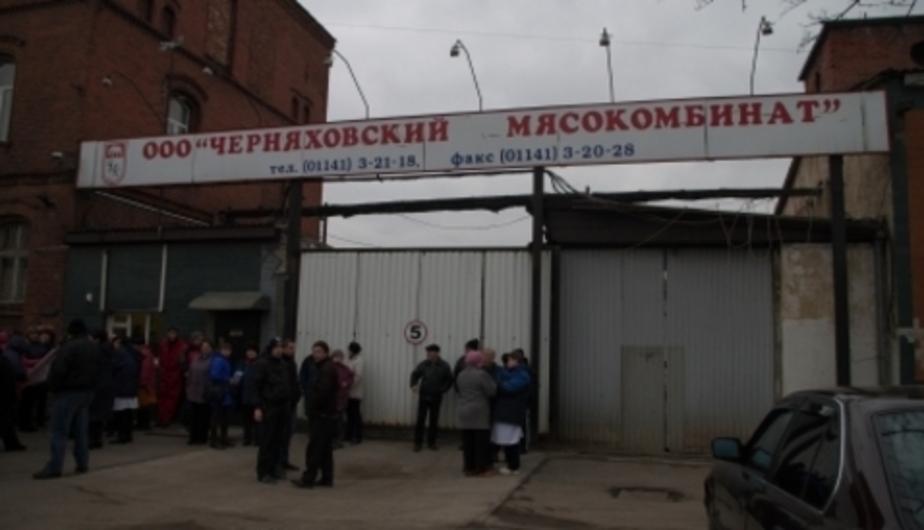 Сотрудникам Черняховского мясокомбината начали выдавать зарплату - Новости Калининграда