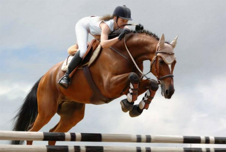 В Черняховске пройдет международный конный турнир - Новости Калининграда