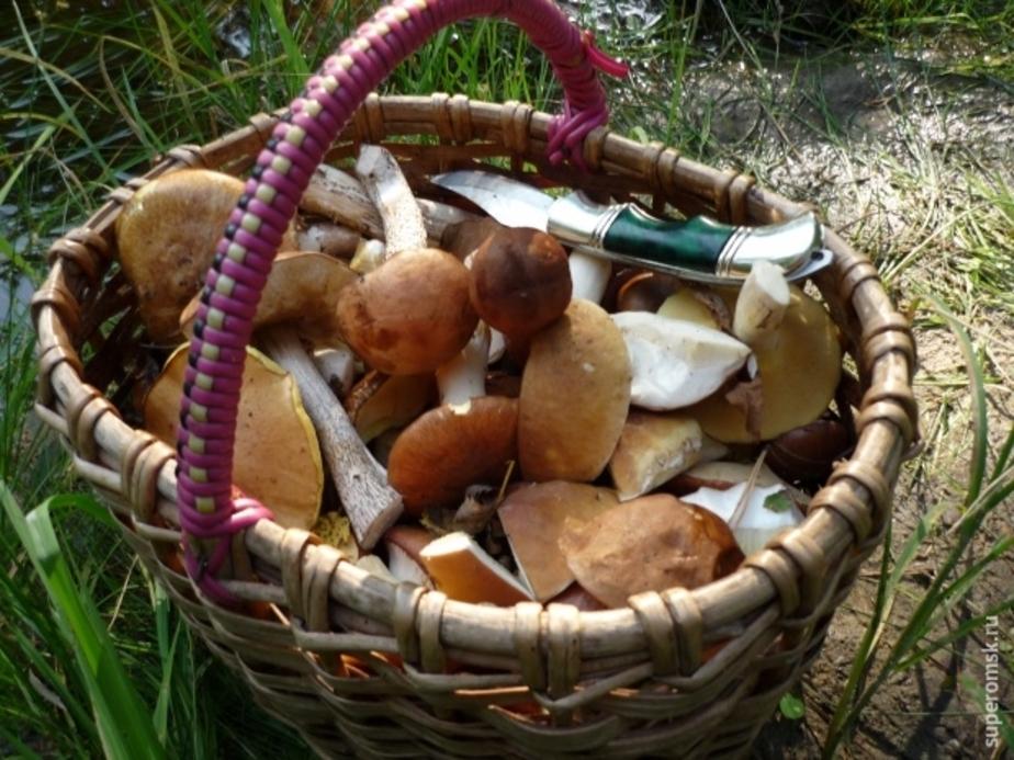 В лесу под Черняховском почти сутки блуждал грибник - Новости Калининграда