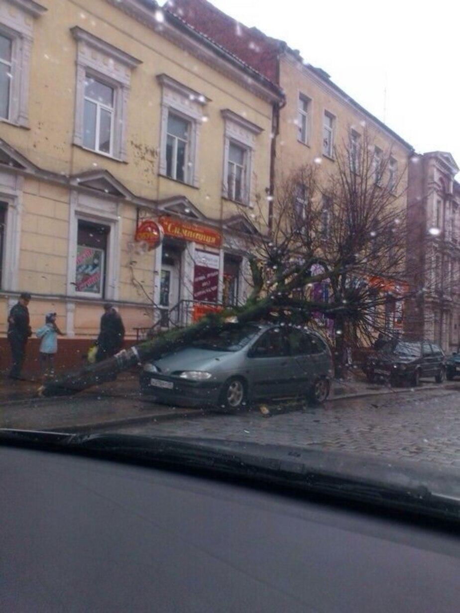 В Черняховске ветер повалил дерево на автомобиль - Новости Калининграда