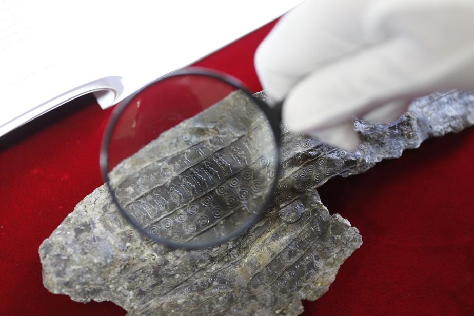 В Калининграде найден ценный артефакт с изображением бога весны - Новости Калининграда