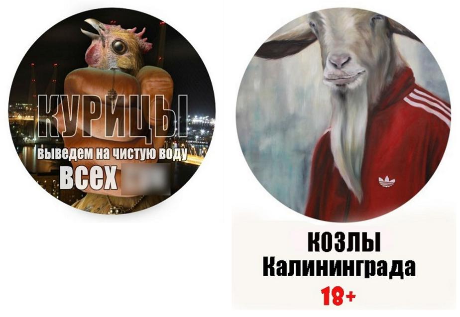 """""""Курицы"""" против """"Козлов"""" - Новости Калининграда"""