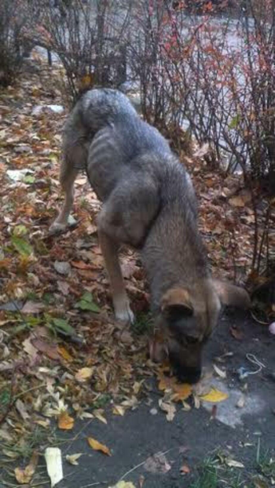 Зеленоградцы пытаются спасти собаку с вросшей в живот проволокой