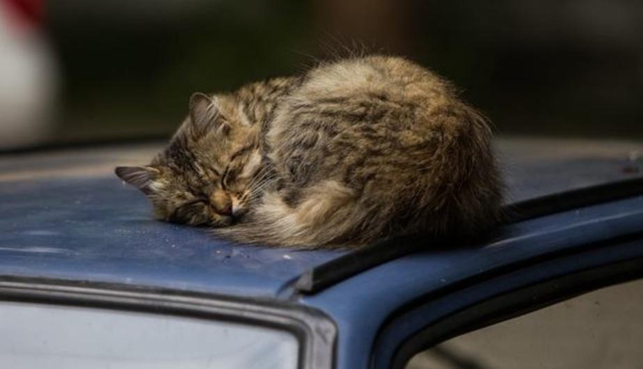 Сотрудники калининградского ботсада расскажут о способностях кошек - Новости Калининграда