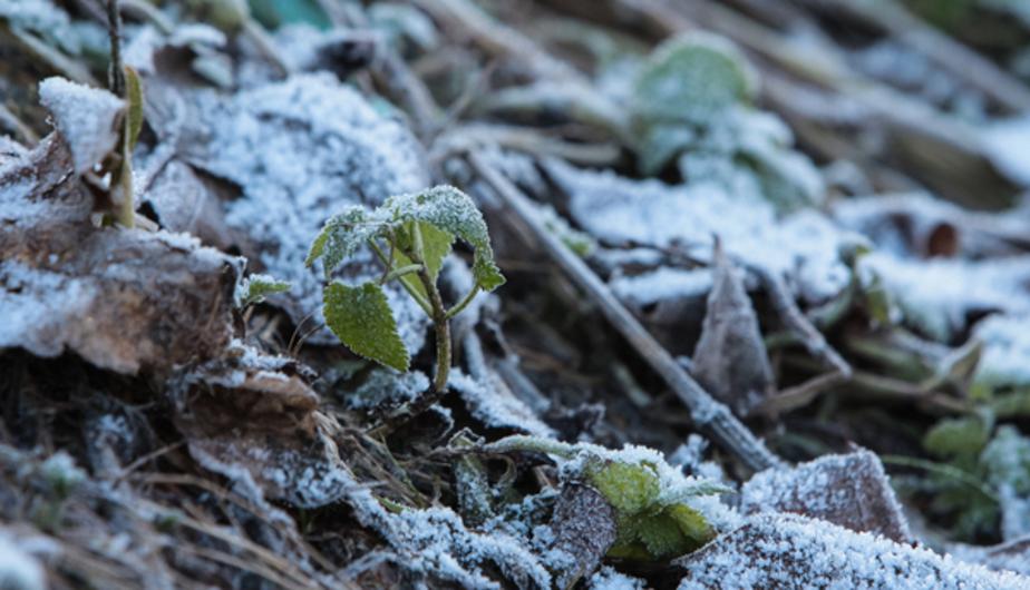 К середине недели температура в области опустится до минусовой отметки